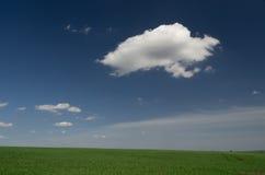 Grüner Feldweizen mit blauem bewölktem Himmel stockbild