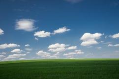 Grüner Feldweizen mit blauem bewölktem Himmel stockfotos