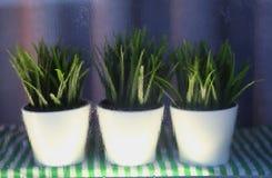 Grüner Fensterregen der Blumen naß stockbilder