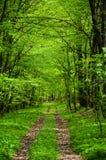 Grüner Forest Road Lizenzfreie Stockbilder