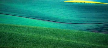 Grüner Frühlingsfeld-Zusammenfassungshintergrund stockfotos
