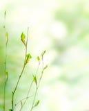 Grüner Frühlingsnaturhintergrund Stockbild