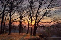 Grüner Frühlingswald in den Sonnenstrahlen Lizenzfreies Stockfoto