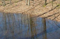Grüner Frühlingswald in den Sonnenstrahlen Stockfoto