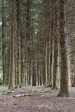 Grüner Frühlingswald in den Sonnenstrahlen Stockfotografie