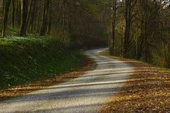 Grüner Frühlingswald in den Sonnenstrahlen Stockbild