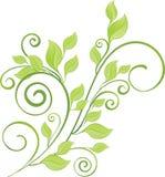 Grüner Frühlingszweig Stockbild