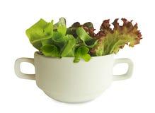 Grüner frischer Salat in der weißen Schale Stockbilder