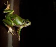 Grüner Frosch auf der Uhr Stockbild