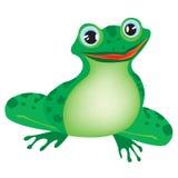 Grüner Frosch auf weißem Hintergrund Stockbilder