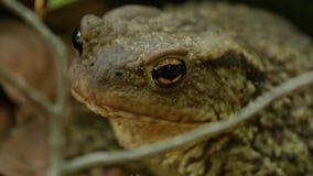 Grüner Frosch-Bild in der Natur in einem Gebirgswald stock video footage