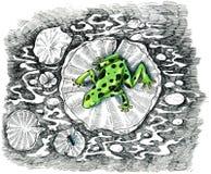 Grüner Frosch, der eine Fliege jagt Stockfoto