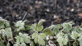 Grüner Frost verlässt am Schmutzbraun und am grauen Steinhintergrund stockfotografie