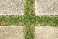 Grüner Fußboden Lizenzfreies Stockfoto