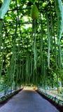Grüner Garten stockfotografie