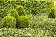 Grüner Garten Lizenzfreie Stockfotografie