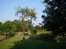 Grüner Garten Stockbilder