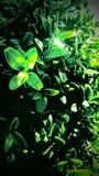 Grüner Garten blüht verrücktes Licht lizenzfreie stockfotografie