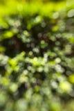 Grüner Garten Bokeh Stockfotografie