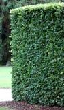 Grüner Garten Borden von den Ahornholzbäumen Stockfotos