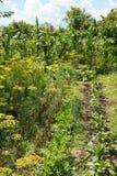 Grüner Garten des Landes auf Hinterhof Lizenzfreie Stockfotos