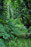 Grüner Garten des Sommers mit Trauben- und Fliederanlagen lizenzfreie stockfotografie