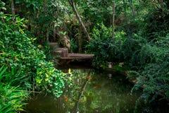 Grüner Garten mit Fischen in der Natur Stockbild