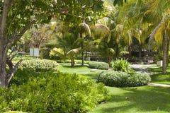 Grüner Garten mit gehendem Klaps Lizenzfreie Stockfotografie
