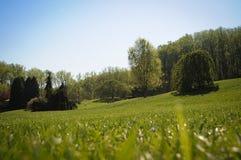 Grüner Garten mit Rasen und Bäumen lizenzfreie stockfotos