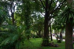 Grüner Garten in Saigon Stockfotografie