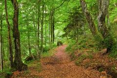 Grüner Gebirgswald in Pyrenees Lizenzfreies Stockfoto