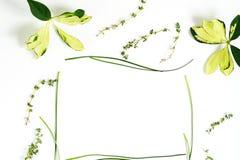Grüner gelber Blattrahmen auf weißem Hintergrund Flache Lage, Draufsicht Auszug Stockfotos