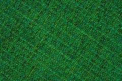 Grüner Gewebebeschaffenheitshintergrund Abstrakter Hintergrund, leerer Temp Stockfotografie