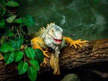 Grüner goldener Leguan stockbild