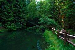 Grüner grüner Wald in Carpatian Stockbild