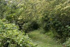 Grüner grasartiger Weg durch Wiese stockfotografie