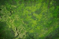 Grüner Grunge Hintergrund Stockfoto
