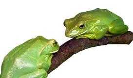 Grüner hölzerner Frosch zwei Stockfoto