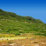 Grüner Hügel Lizenzfreies Stockfoto