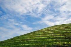 Grüner Hügel stockfotos