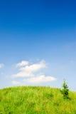 Grüner Hügel stockfoto