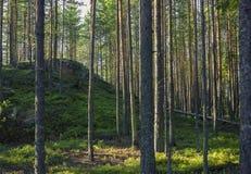 Grüner Hügel im Koniferenwald Lizenzfreie Stockfotos