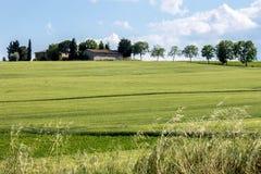 Grüner Hügel im toskanischen coutryside Stockbilder
