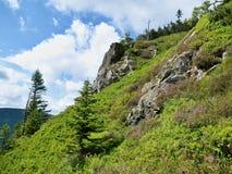Grüner Hügel mit zwei Bäumen und Himmel mit Wolken Stockbild