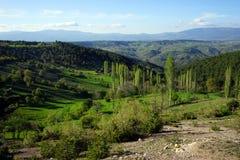 Grüner Hügel und Berg Stockfotografie