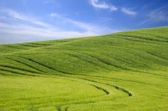 Grüner Hügel und blauer Himmel Lizenzfreies Stockbild