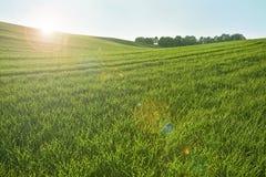 Grüner Hügel und Strahlnlicht stockfotografie