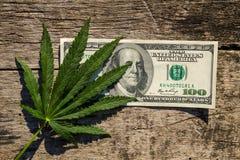 Grüner Hanf treiben und 100 Dollarschein auf Holztisch Blätter Stockfotografie