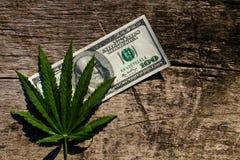 Grüner Hanf treiben und 100 Dollarschein auf Holztisch Blätter Lizenzfreie Stockfotografie