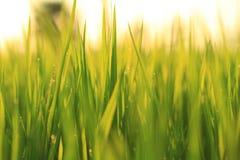 Grüner Hintergrund. Lizenzfreie Stockfotos